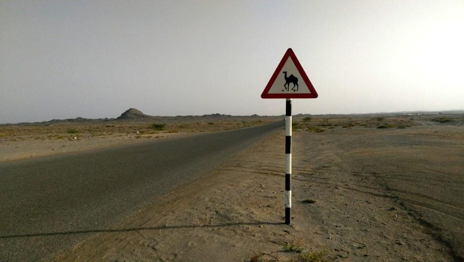 Ein Straßenschild mit Kamel im Oman