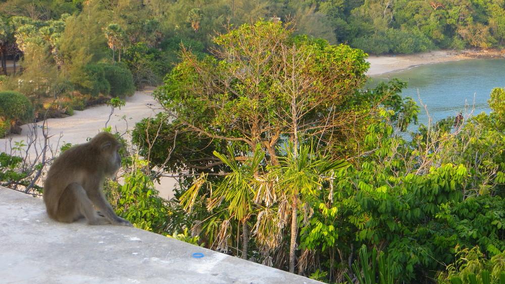 Ein Affe im Mu Ko Lanta Nationalpark