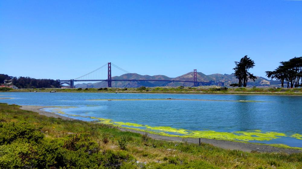 Blick auf Chrissy Field und die Golden Gate Bridge