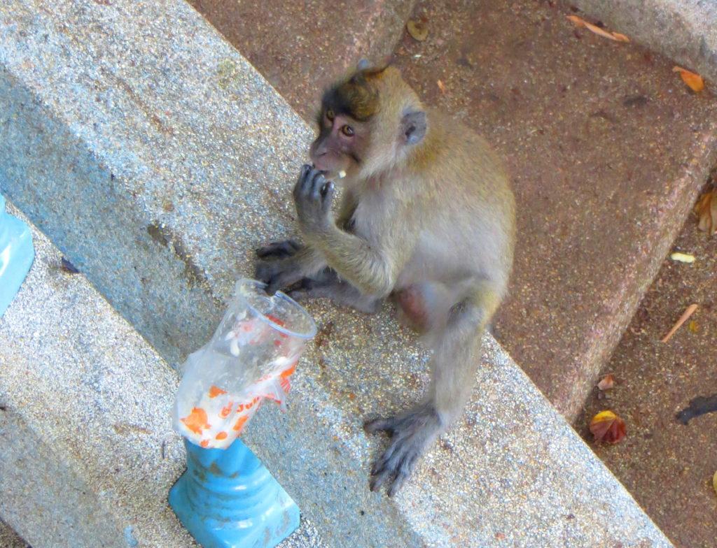 Fressender Affe am Tiger Cave Tempel