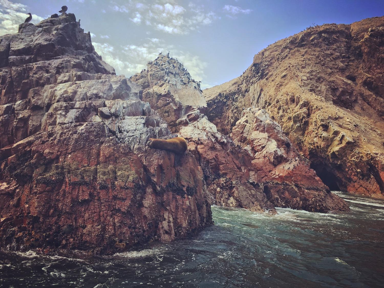 Islas Ballestas Tiere