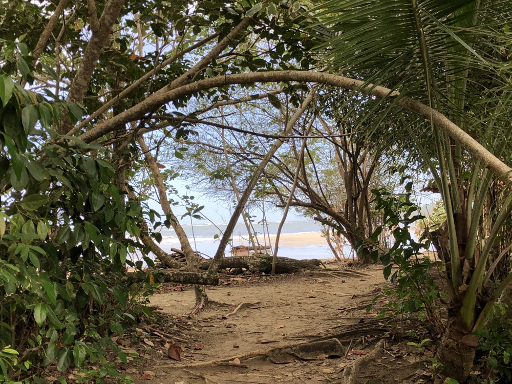 Dschungel Durchgang Cahuita