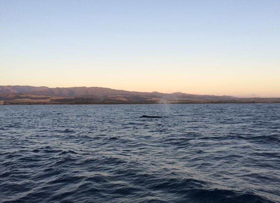 Whale Watching Cruise, Kauai
