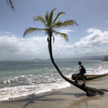 Paradiesische Palme