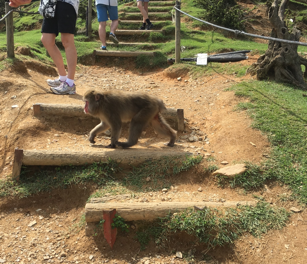 Auf dem Weg - Affenpark Kyoto