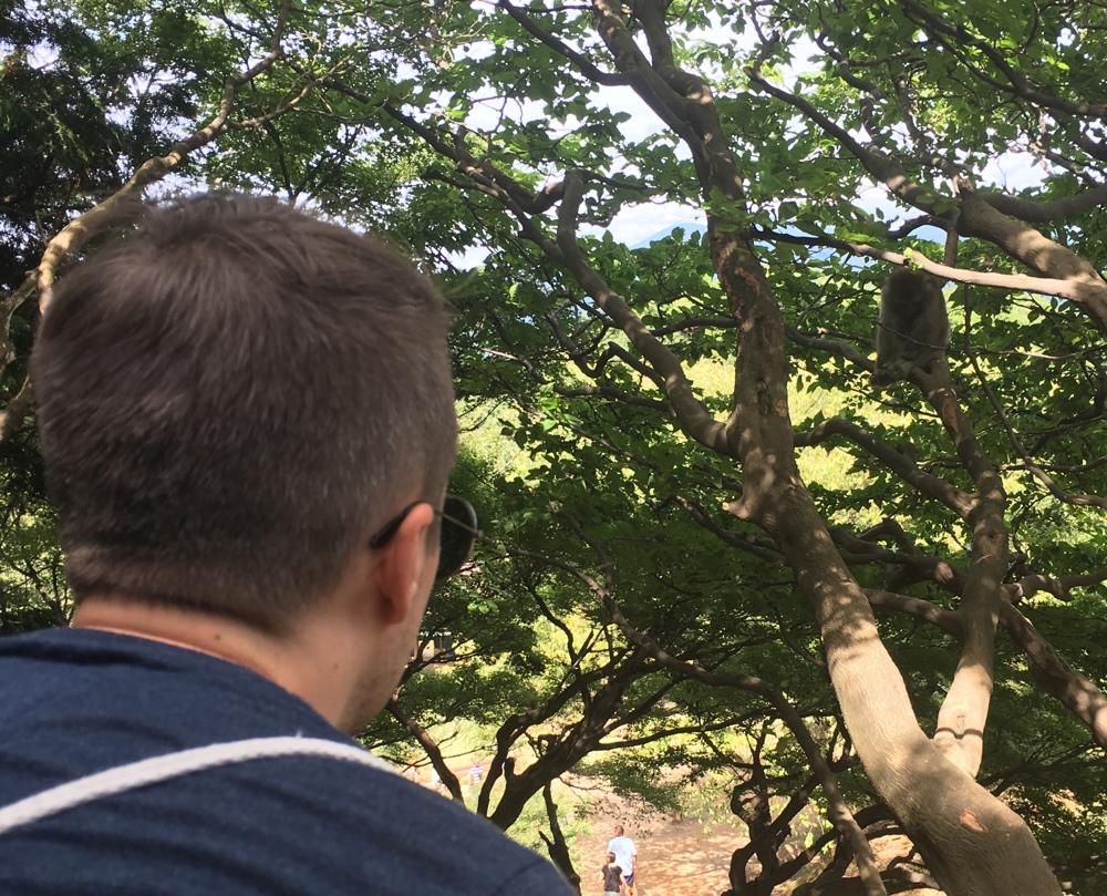 Baum - Affenpark Kyoto