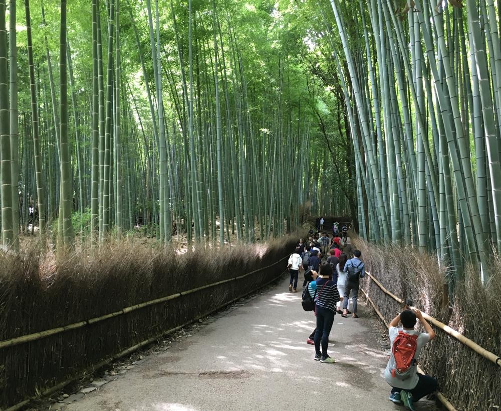 Weg Bambuswald Affenpark - Kyoto