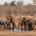 Elefanten an einem Wasserloch im Kruger National Park