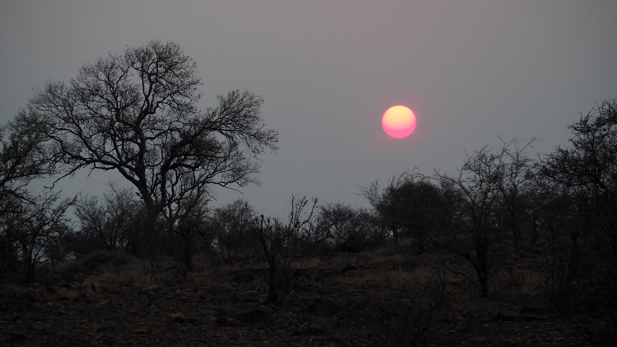 Sonnenuntergang im Kruger NP