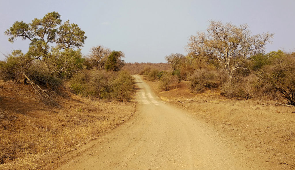 Schotterpiste im Kruger National Park