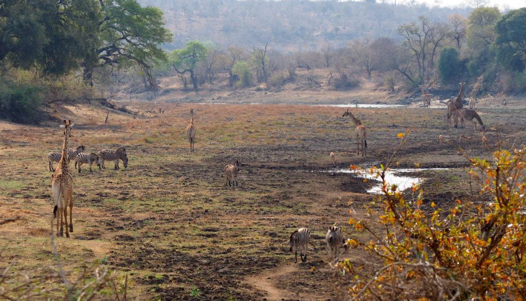 Flussbett im Kruger NP