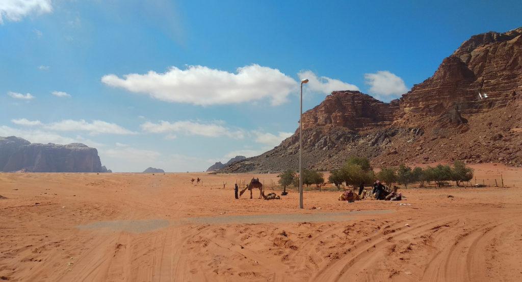 Kamele im Wadi Rum Village