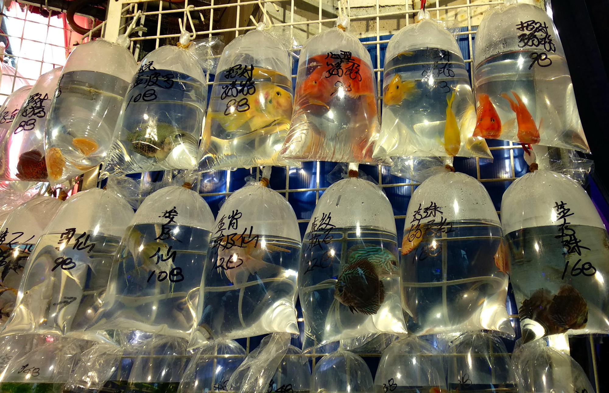 Goldfish Market Mong kok