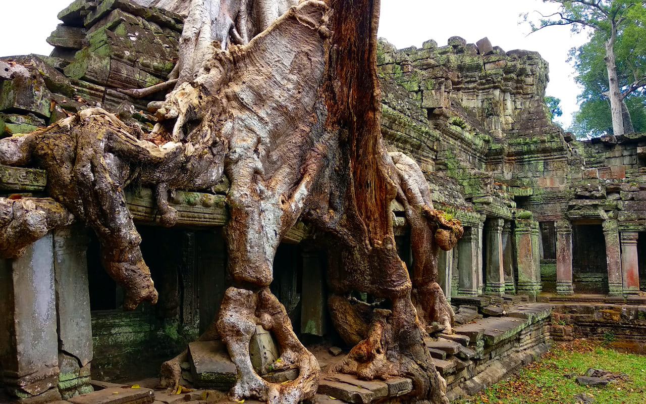 Baumwurzel in Preah Khan
