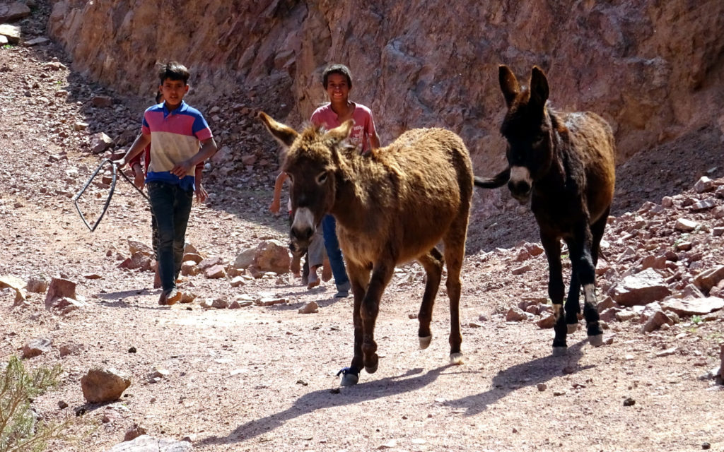 Bedouin-Kids-with-Donkeys
